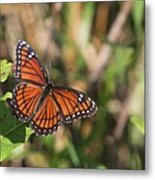 Butterfly In The Everglades Metal Print