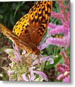 Butterfly In The Garden Metal Print