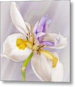 Butterfly Iris Metal Print