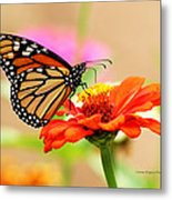 Butterfly Lunch Metal Print by Lorna Rogers Photography