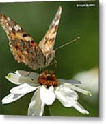 Butterfly Macro Photography Metal Print