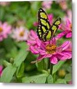 Butterfly On A Flower Metal Print
