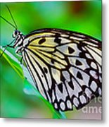 Butterfly On A Leaf Metal Print