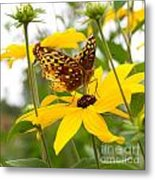 Butterfly On Blackeyed Susan Metal Print