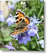 Butterfly On Blue Flower Metal Print
