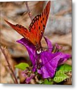 Butterfly On Bouganvilla Metal Print