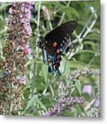 Butterfly On Bush Metal Print