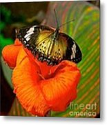 Butterfly On Canna Flower Metal Print