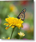 Butterfly On Carnation Metal Print