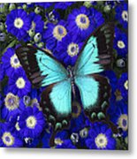 Butterfly On Cineraria Metal Print