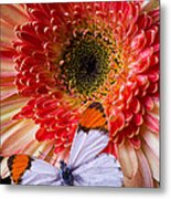 Butterfly On Daisy Metal Print