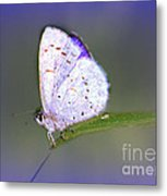 Butterfly On Grass Metal Print