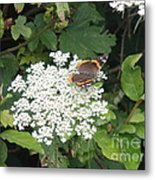 Butterfly On Lace Metal Print