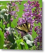 Butterfly On Lilac Metal Print