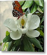 Butterfly On Magnolia Blossom Metal Print