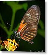 Butterfly On Orange Bloom Metal Print
