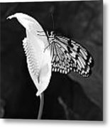 Butterfly On Peace Lilly Metal Print