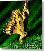 Butterfly On Pine Metal Print