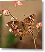 Butterfly On Pink Metal Print