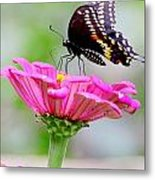 Butterfly On Pink Flower Metal Print
