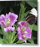 Butterfly On Pink Lillies Metal Print