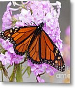 Butterfly On Pink Phlox Metal Print