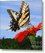Butterfly On Red Daisy Metal Print