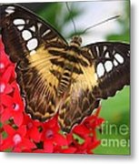 Butterfly On Red Flower Metal Print