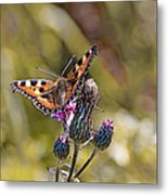 Butterfly On Tistle Sep Metal Print