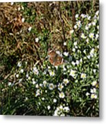 Butterfly On White Flowers Metal Print