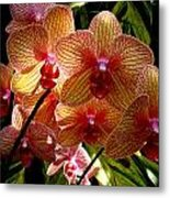Butterfly Orchids Metal Print