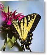 Butterfly Out Of The Blue - Blue Butterfly Art Metal Print