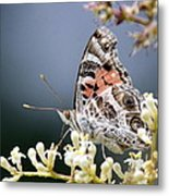 Butterfly - Painted Lady - Tasty Out Here Metal Print