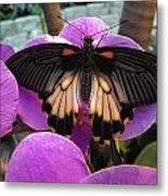 Butterfly Palace Metal Print