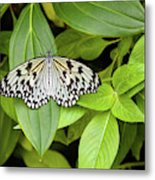 Butterfly Perching On Leaf In A Garden Metal Print