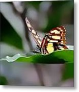 Butterfly Planted Metal Print