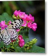 Butterfly Pollinating Flower Metal Print