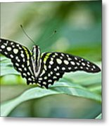 Butterfly Resting Color Metal Print