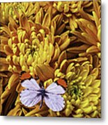 Butterfly Resting On Mums Metal Print