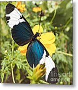Butterfly Sara Longwing Metal Print