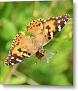 Butterfly Series 1 Of 5 Metal Print