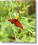 Butterfly Series 3 Of 5 Metal Print
