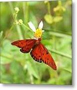 Butterfly Series 4 Of 5 Metal Print