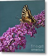 Butterfly Metal Print by Simona Ghidini