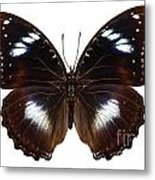 Butterfly Species Hypolimnas Bolina  Metal Print