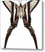 Butterfly Species Lamproptera Curius  Metal Print