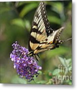 Butterfly Sucking On Some Pollen Metal Print