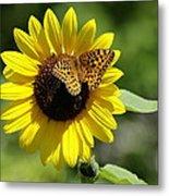 Butterfly Sunflower Metal Print