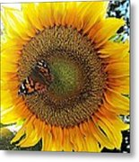 Butterfly Sunflower Metal Print