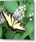 Butterfly - Swallowtail Metal Print